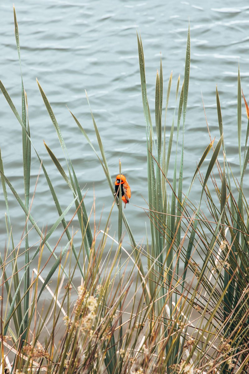 Bird sitting in the river reeds