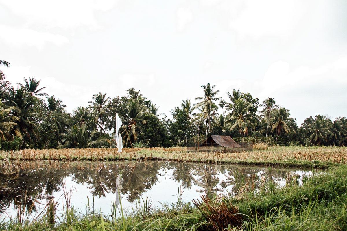 Body of water on the Ubud Rice Field Walk