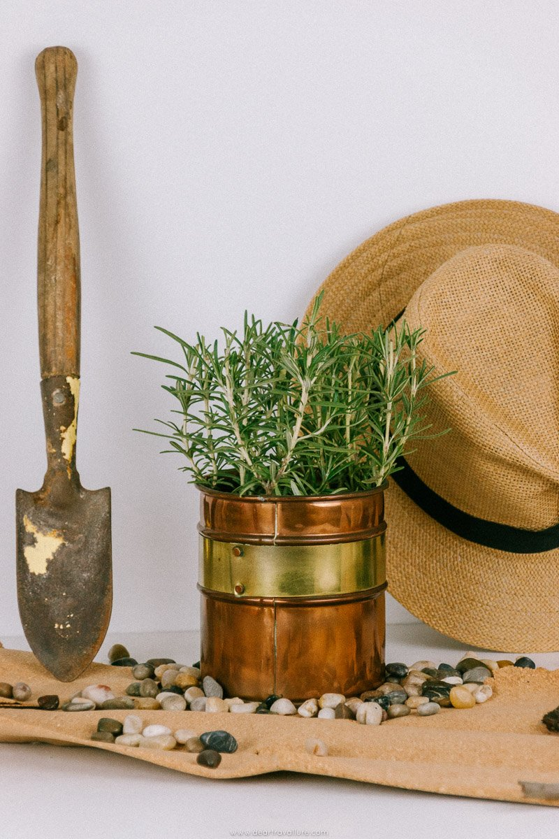 Rosemary with some gardening items scattered around