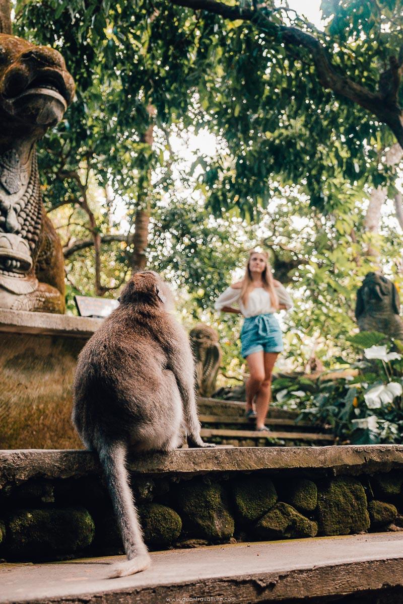 Monkey staring at Tammy