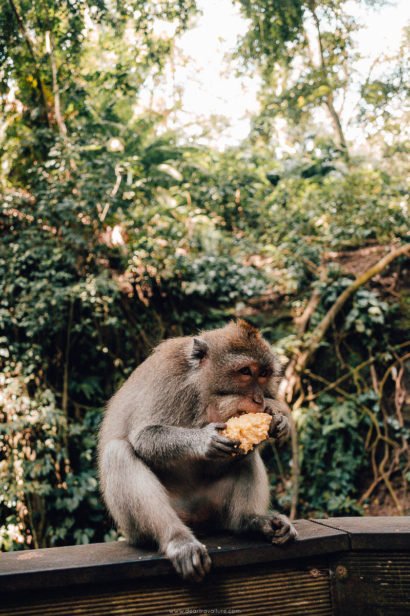 Monkey Eating Fruit at The Monkey Forest