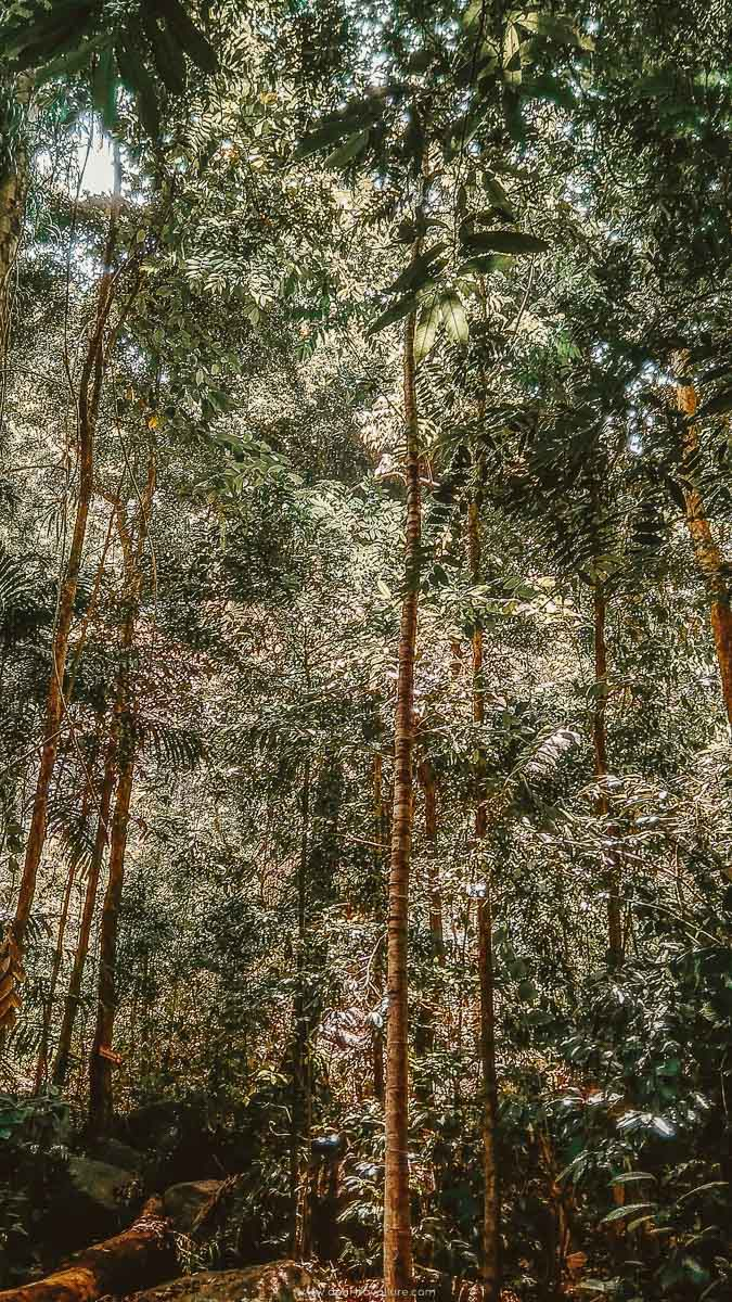 Tall tress inside the forest you will be hiking through