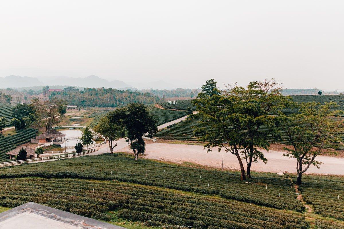 Landscape at the Choui Fong Tea Park