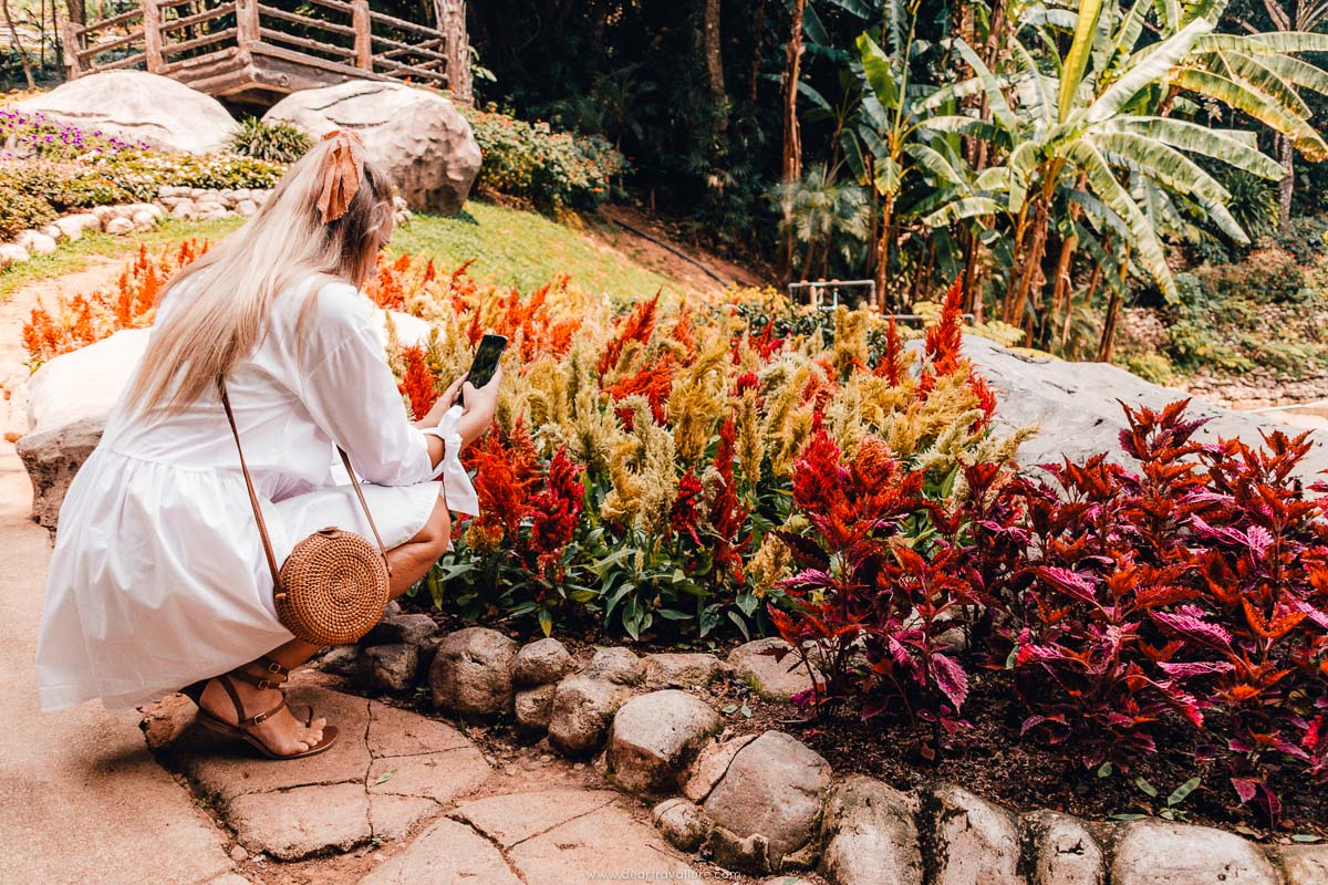Taking photos of Flowers at the Mae Fah Luang Gardens
