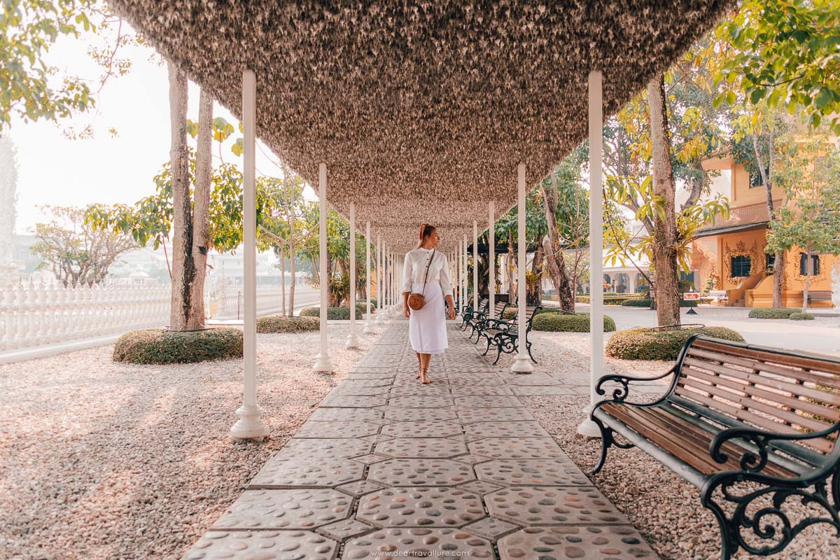 Walking by the Silver Bodhi tree leaves