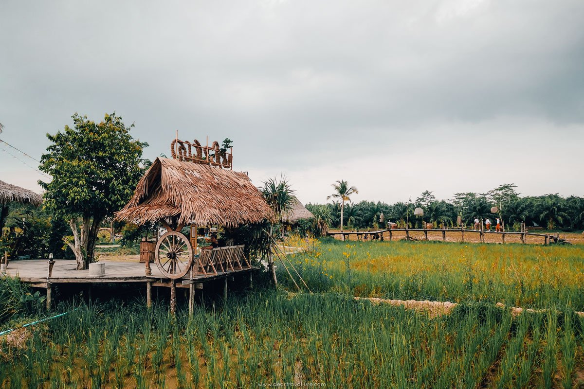 A view of the rice fields from Napaoke