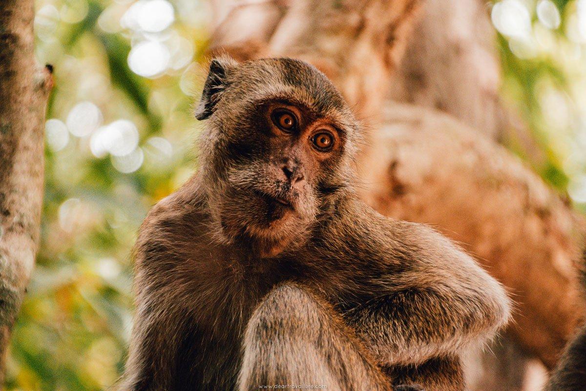 Monkey at Phraya Nakhon Cave