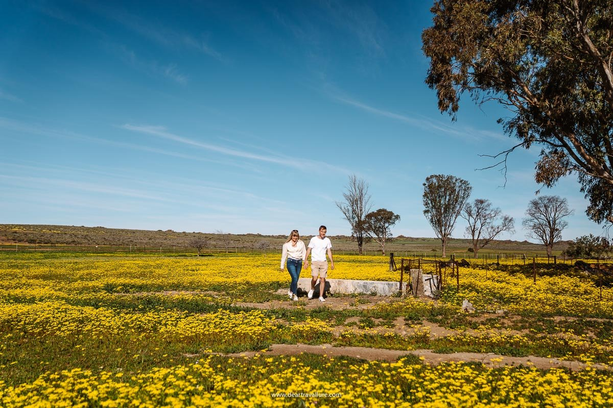 Tammy and Byron walking through fields of yellow flowers
