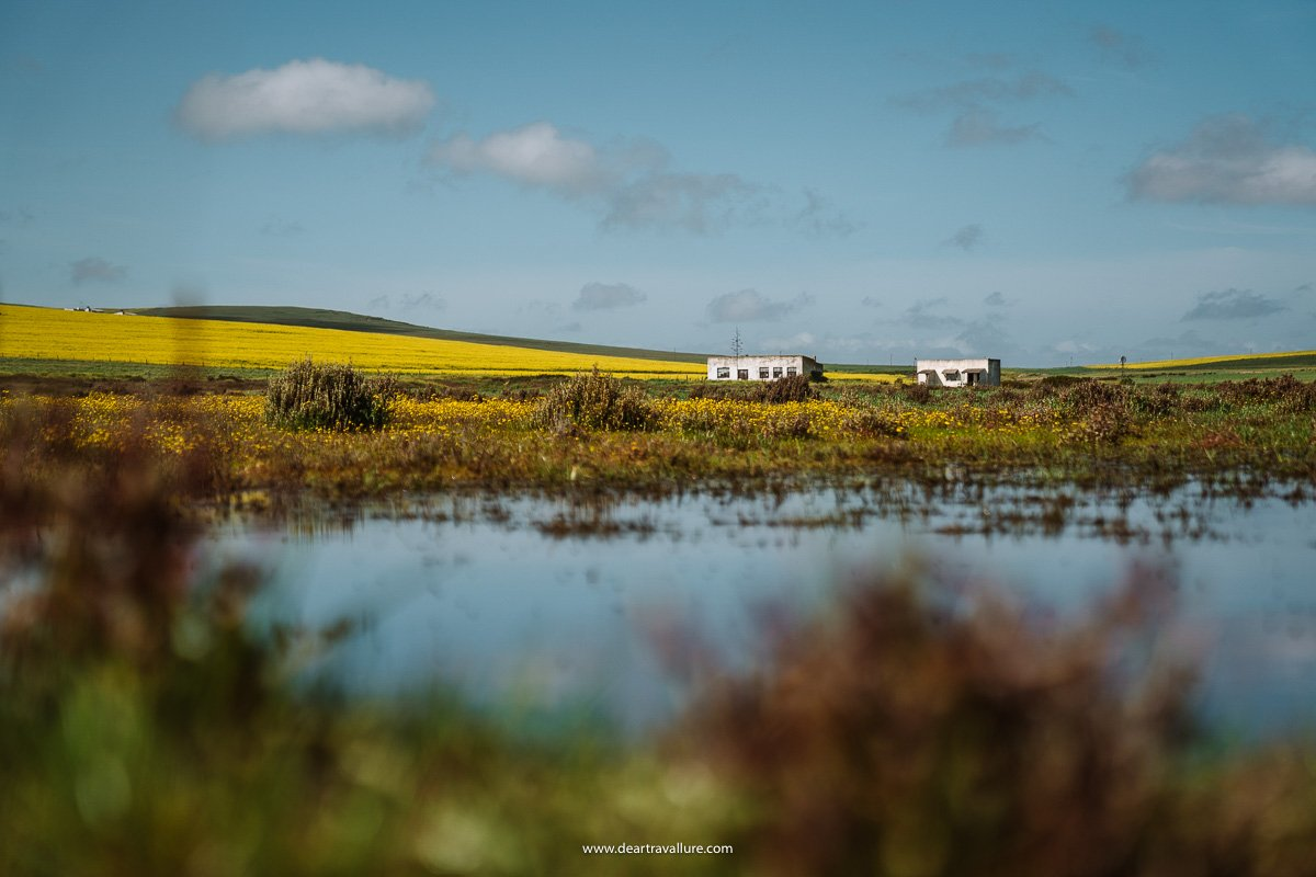 Yellow fields of flowers and an old farmhouse at Tinie Versfeld