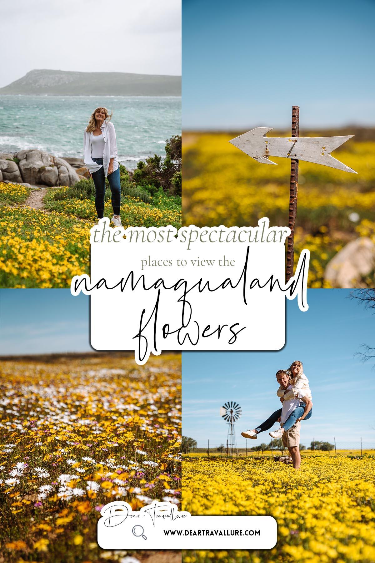 Namaqualand Flowers - Pinterest Image